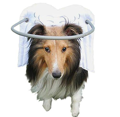 Muffin's Halo Guide for Blind Dogs...