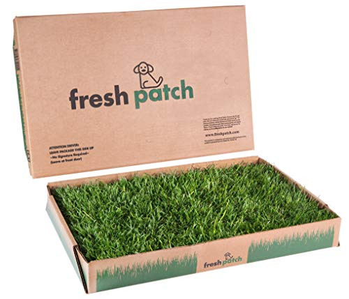 Fresh Patch Standard - Real Grass Pee and Potty Training Pad for...