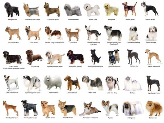 Dog Breeds A Z The Complete Guide