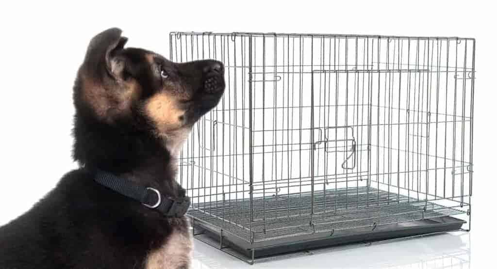 German Shepherd Kennels, Houses and Crates
